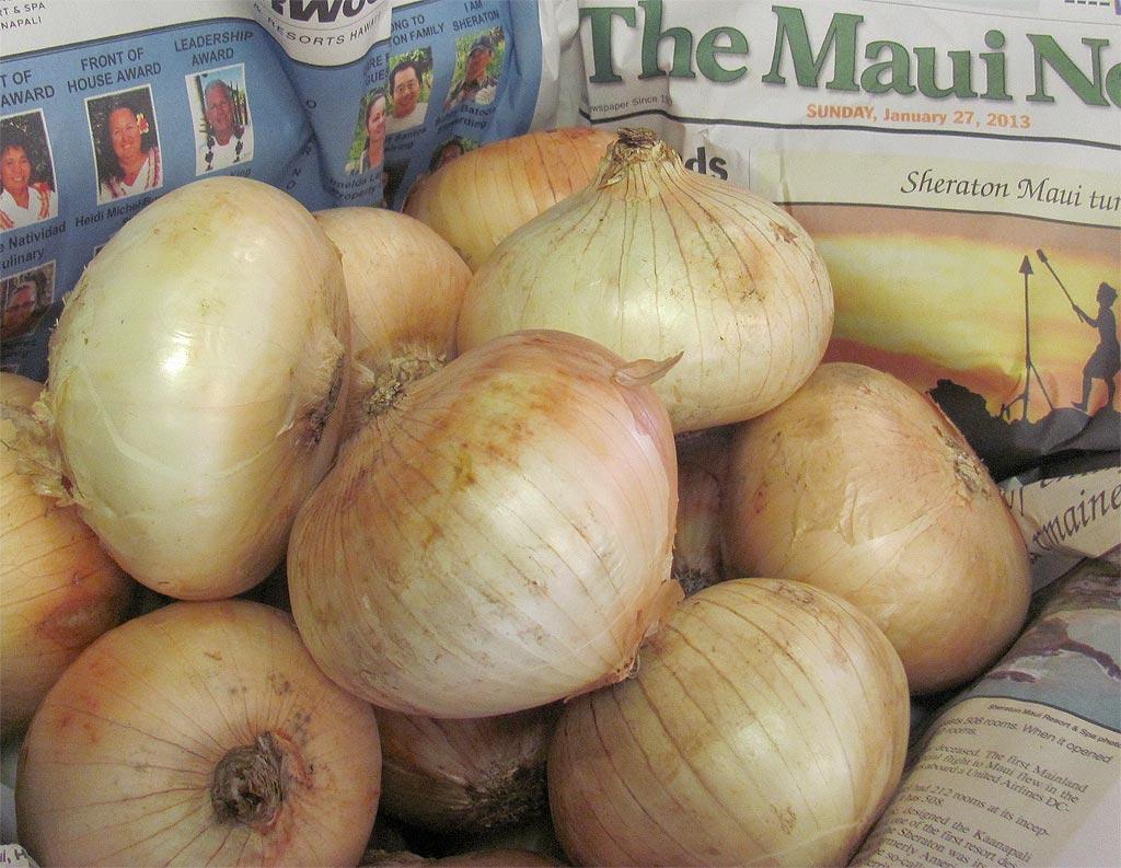 sweet maui onions