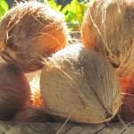 Husked Maui Coconut